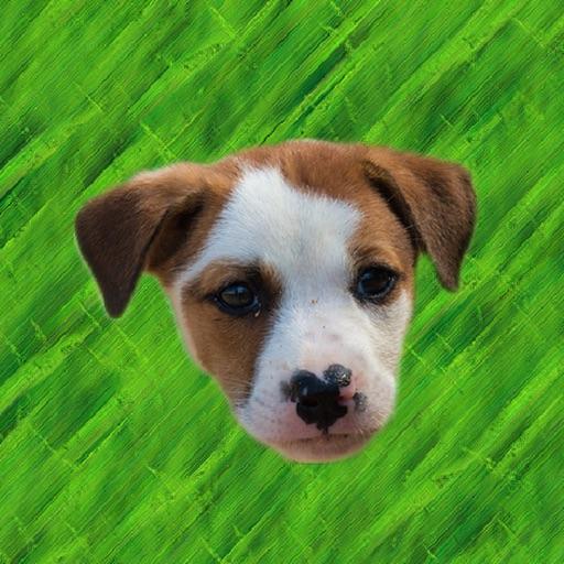 Cute Puppy - Stickers