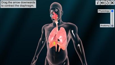 Respiratory system physiology screenshot 4