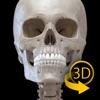 骨格 - 解剖学3D アトラス - iPhoneアプリ