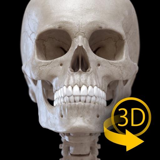 Baixar Esqueleto Anatomia 3D para iOS