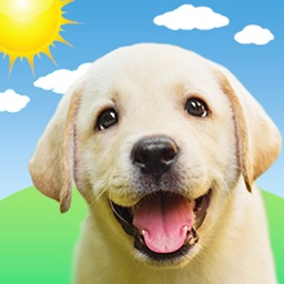 Weather Puppy Forecast + Radar