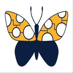 Butterflies Australia