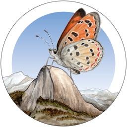 Yosemite Butterflies