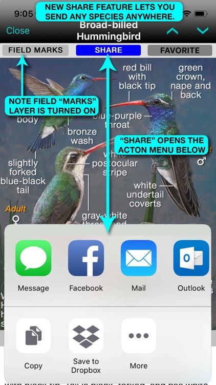iBird Plus Guide to Birds screenshot-5