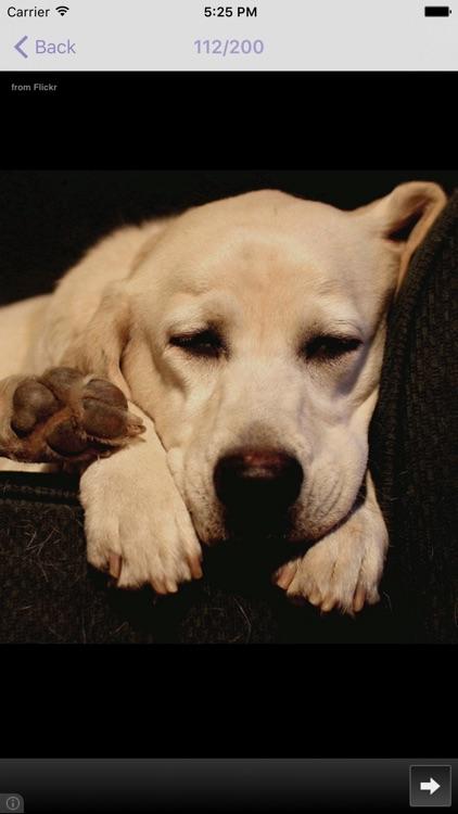 Dog Breeds - for dog lovers - screenshot-4