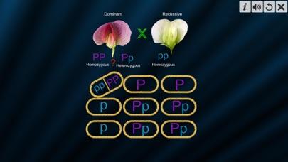 Test Cross: pea flower screenshot 3