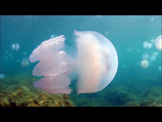 Video Touch - Sea Life screenshot 8