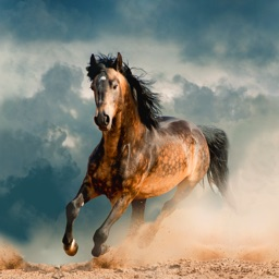 Horse Wallpapers & Backgrounds