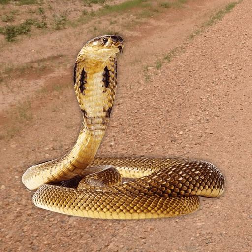 Hiss - Snake Sounds