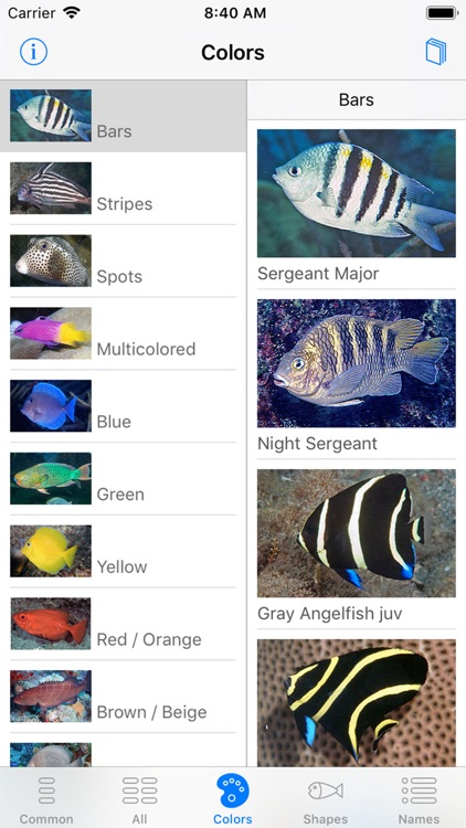 Easy Fish ID Caribbean screenshot-4