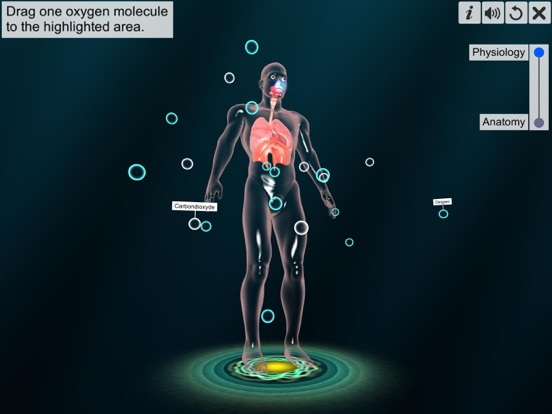 Respiratory system physiology screenshot 10