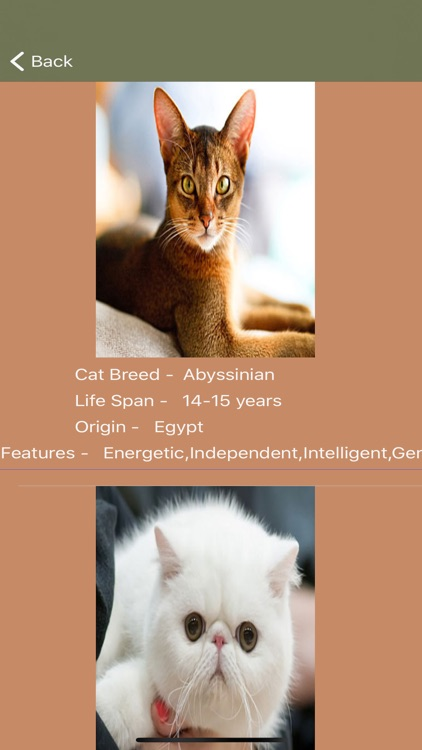 Cat Breeds - Identify your Cat screenshot-4