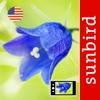 Wildflower Id USA Photo Recog.