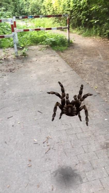 AR Spiders screenshot-5