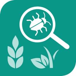 Plant identification Or Animal