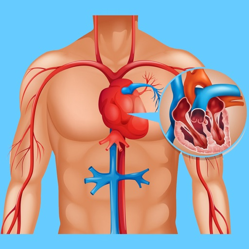 Cardiovascular System Quizzes