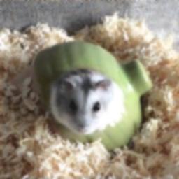 Hamster Slider Puzzle