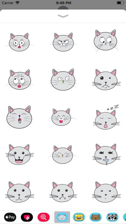 Lovely cat face