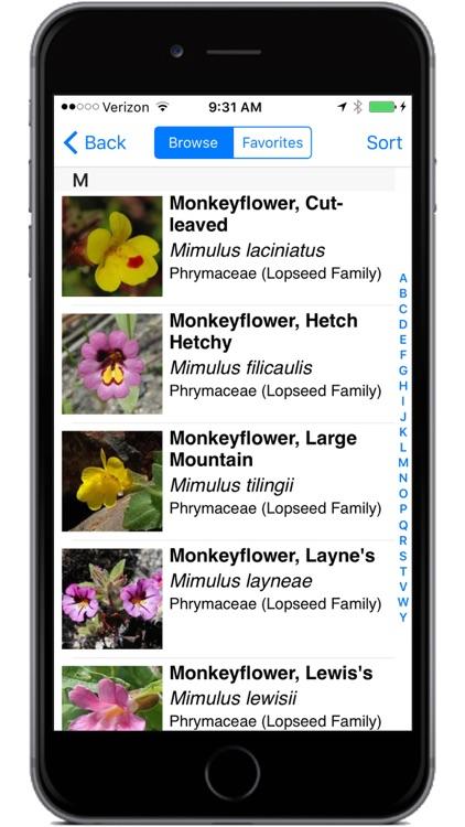 Yosemite Wildflowers