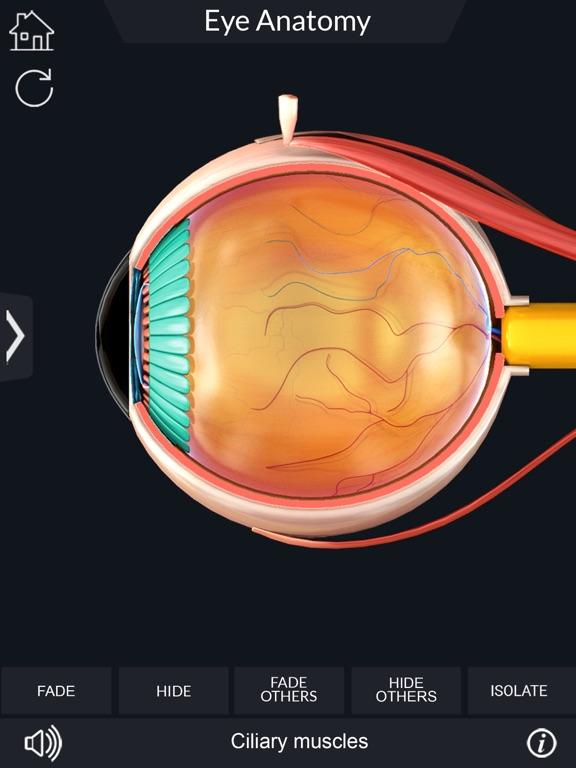 My Eye Anatomy screenshot 12