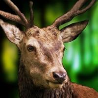 Codes for Deer Sniper Hunting Game 2020 Hack