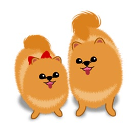 Daughter And Mother Pomeranian