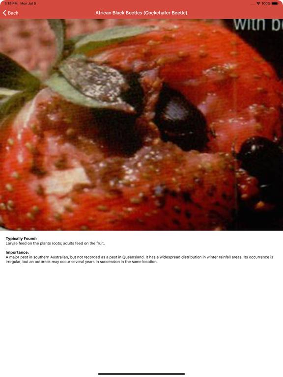 Bug Identifier By Photo App