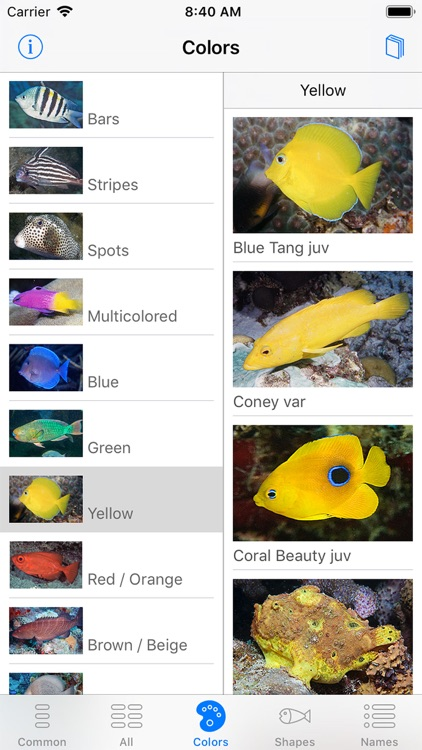 Easy Fish ID Caribbean screenshot-3
