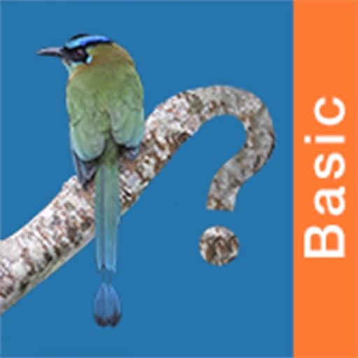Panama Birds Field Guide Basic
