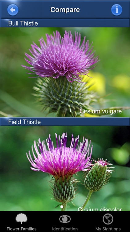 Wildflower Id USA Photo Recog. screenshot-4