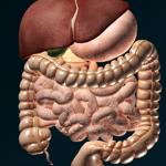 3D внутренние органы анатомия на пк