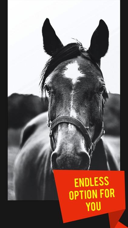 Beautiful HD Horse Wallpapers screenshot-3