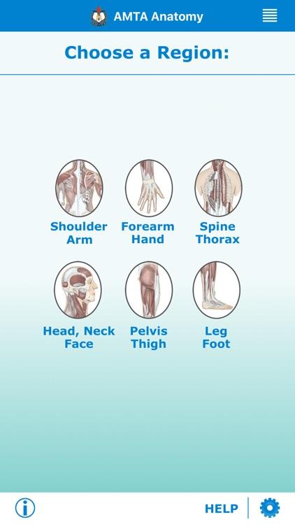 AMTA Massage Anatomy Guide