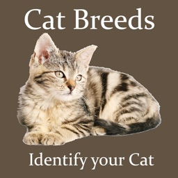 Cat Breeds - Identify your Cat