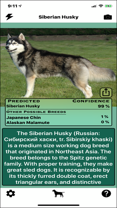 Dog Breed Identifier screenshot 2