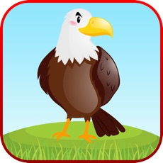 Activities of Bird Sounds Fun Learning Games