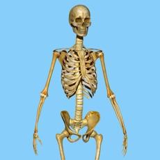 Activities of Skeletal System Quizzes
