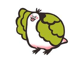 Fresh Cabbage Bird