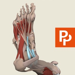 Leg, Ankle, Foot: 3D Real-time