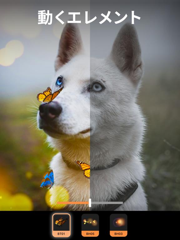 Pixaloop (ピクサループ)のおすすめ画像6