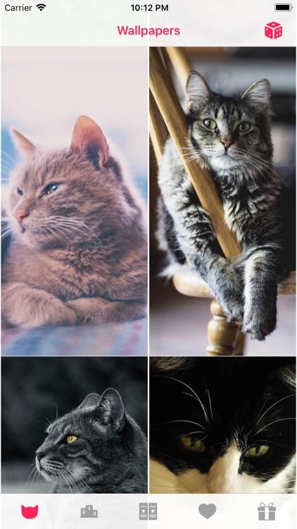 Cat Wallpapers °