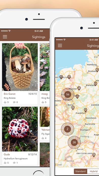 Mushroom LITE - Field Guideのおすすめ画像5