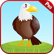 Activities of Bird Sounds Animal Kids Games