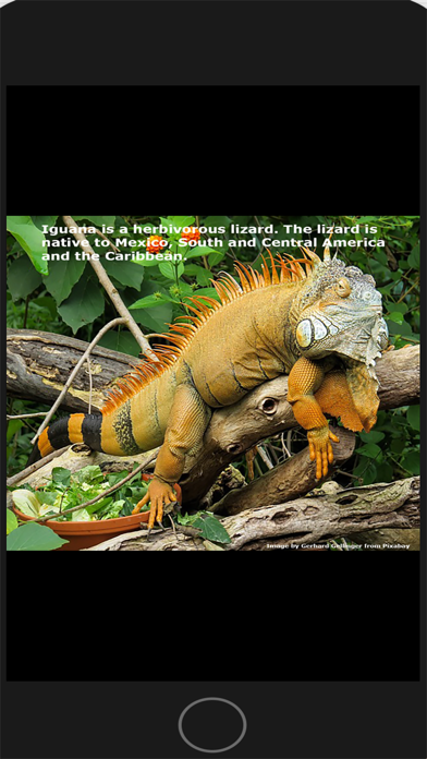 Two Iguanas 5