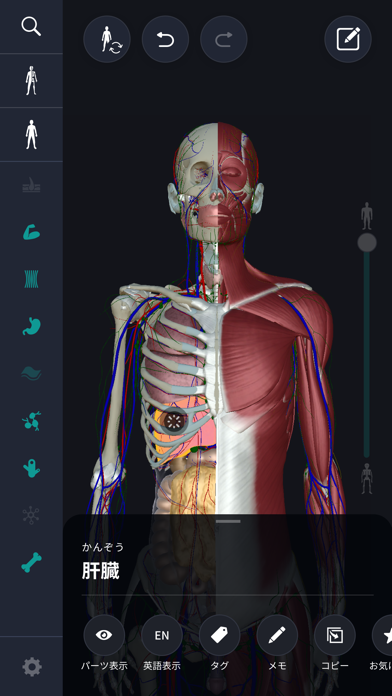 3D人体解剖学 teamLabBody2020 screenshot1