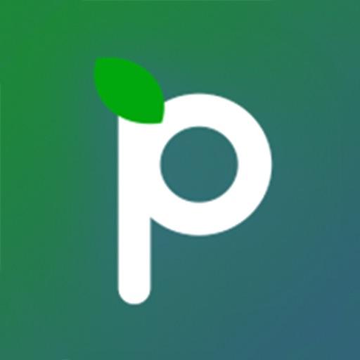 Paerpay
