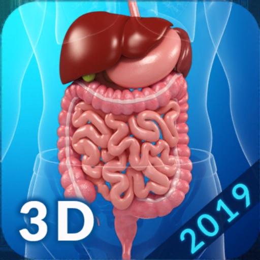 My Digestive System Anatomy