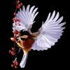 Songbirds 2.0 Reviews