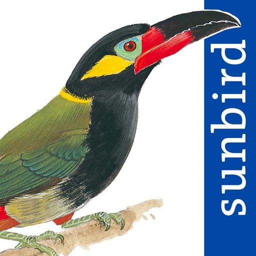 All Birds Guianas
