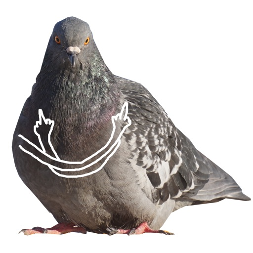 Pigeon With Hands